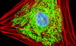 pco.pixelfly gallery: Multiprobe Fluorescence Imaging